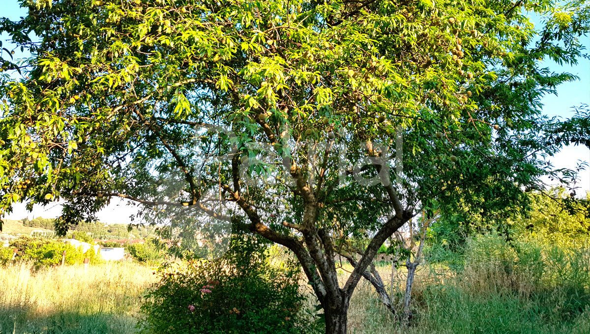 caseta-con-huerto-en-sarinena-huesca-con-frutales